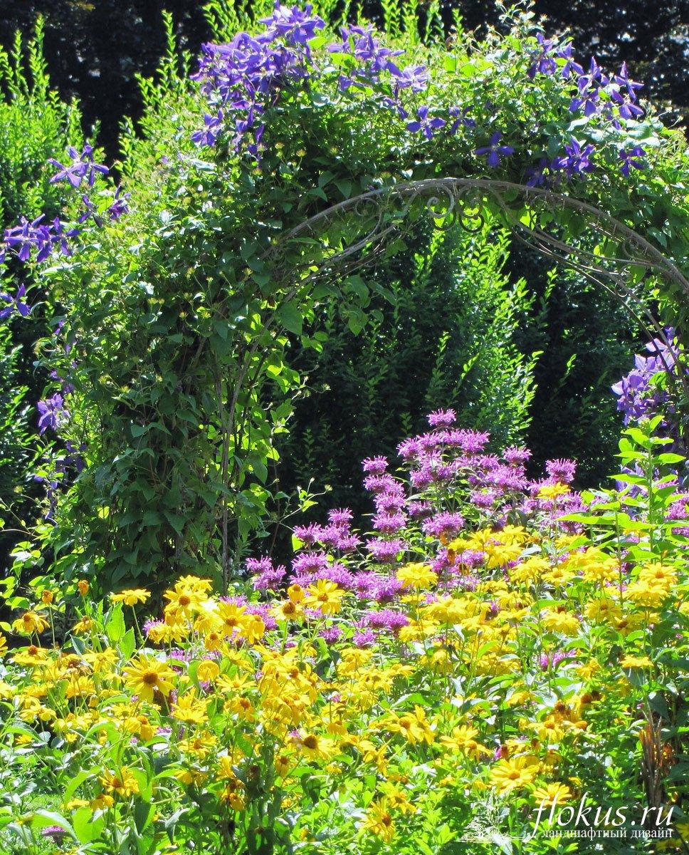 Клематисы и розы в дизайне сада