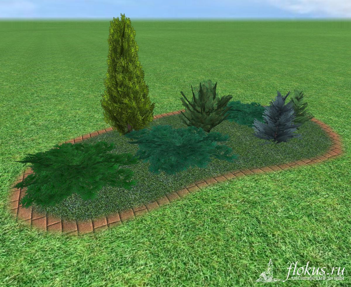 Посадка хвойных растений схема посадки фото