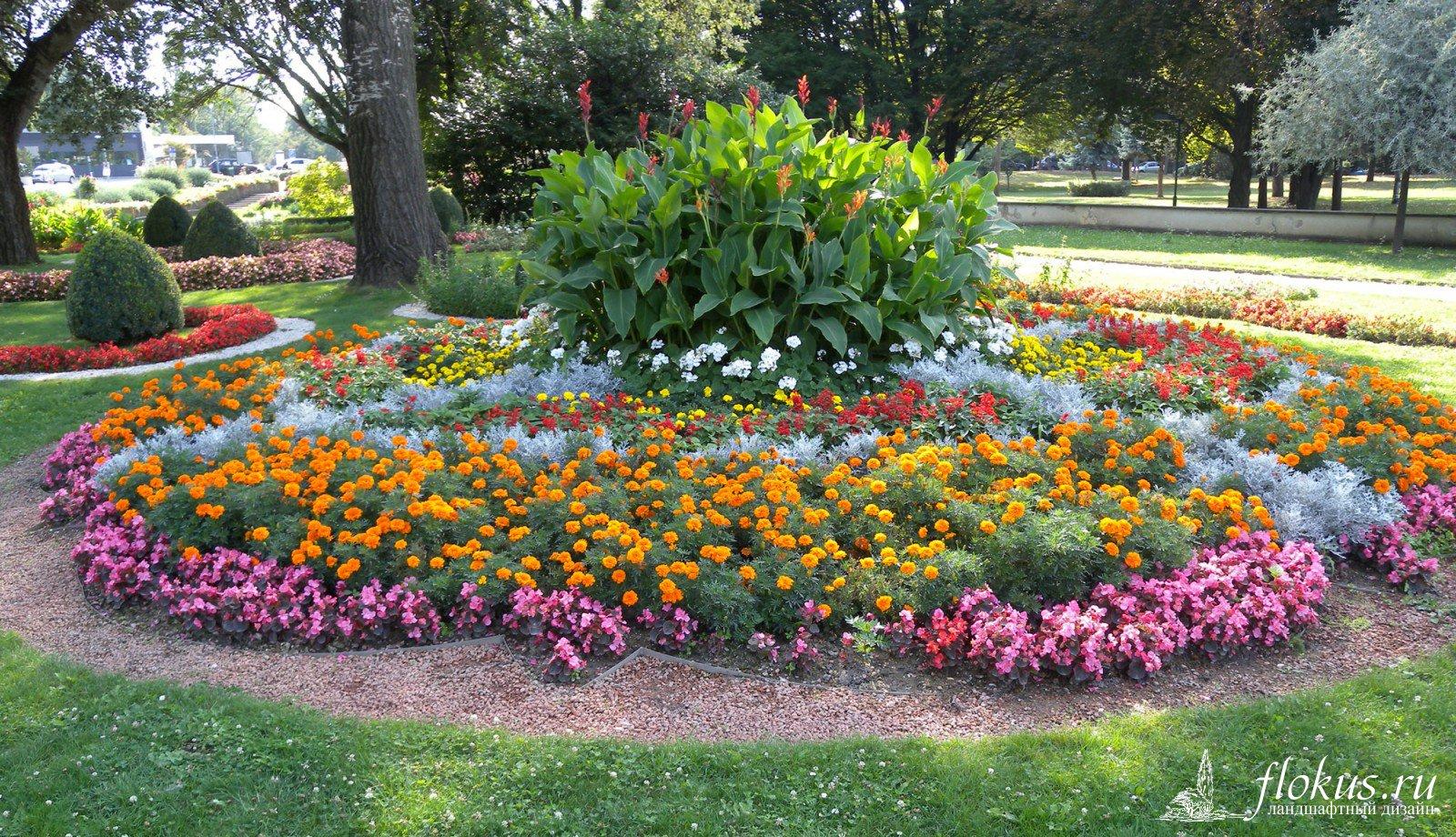 Цветы для газонов и клумб фото названия
