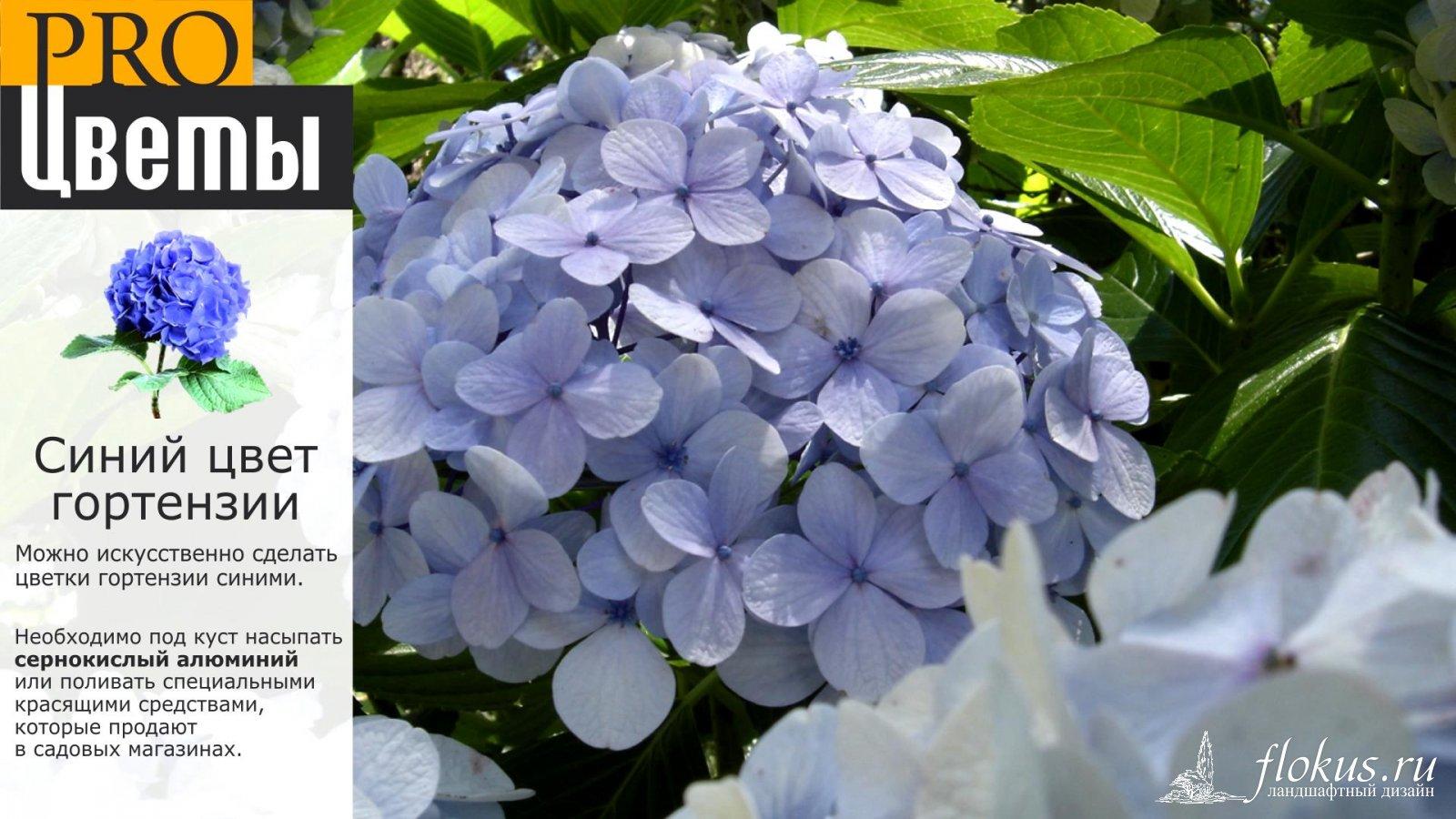 Как сделать цветок гортензию
